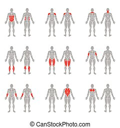 Human body muscles - Human muscles silhouettes isolated on...