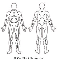 Human body muscles silhouette - Human body silhouette with...