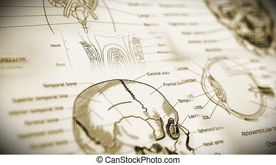 Human Body Parts v2 1