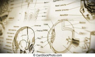 Human Body Parts v2 4