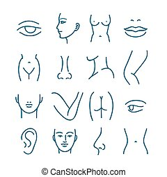 Human body parts vector line icons for plastic or cosmetic surgery