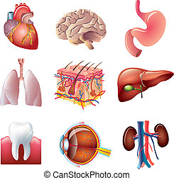 human body parts colorful and detailed vector set