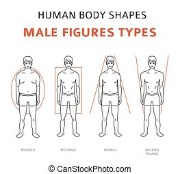 Human body shapes. Male figures types set