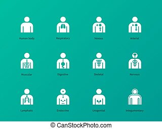 Human body systems pictograms on green background.