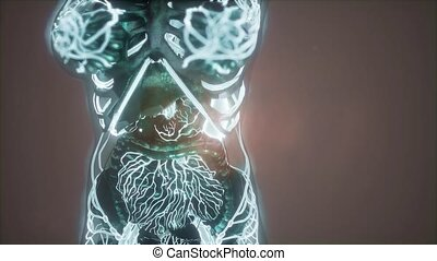 Human Body with Glow Blood Vessels - science anatomy of...