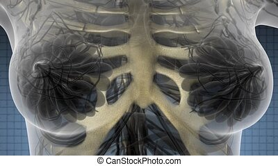 Human Body with Visible Skeletal Bones - science anatomy...