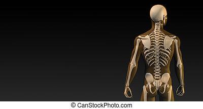 Human Bone Structure Diagram