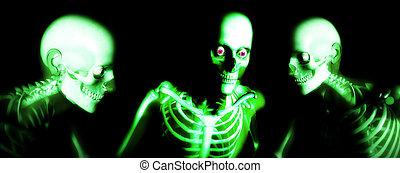 Human Bones 108