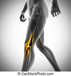 human bones radiography scan image - human bones radiography...