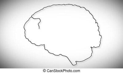 Human Brain 02