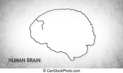 Human Brain 06