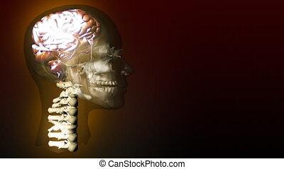 Human Brain 1 - Animation of the Human Brain
