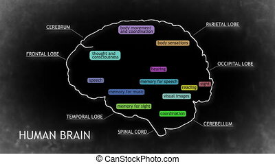 The human brain structure animation illustration