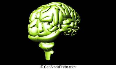 Human Brain 2 - 3D hd animation of a brain