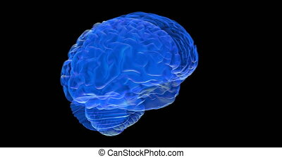 Human brain 3D render - Human brain on black background....