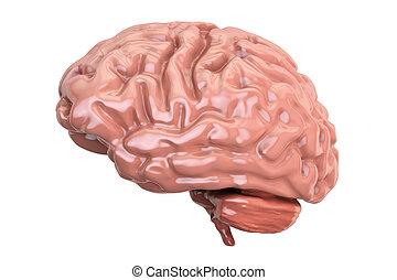 artificial human brain model, 3d rendering, black backgroundartificial human brain model, 3d rendering, black background