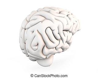 Human Brain - A human brain. Medical. 3D rendered...