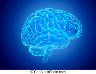 human brain activity - Brain model xray look isolated on...