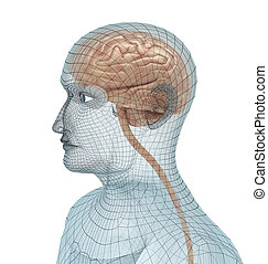 Human brain and body wire model