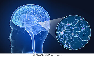 Human Brain and nerve cell anatomy in details. 3D illustration
