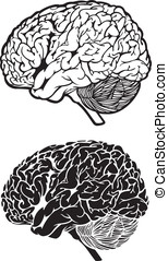 Human Brain Black and White Anatomy Cartoon Vector Graphic Illustration Set