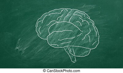 Human brain - Brain drawing with chalk on green board