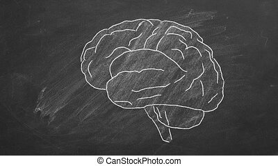 Human brain - Chalk drawn human brain on a blackboard.
