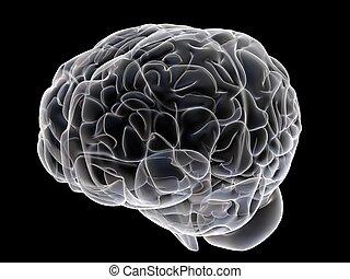 human brain - 3d rendered anatomy illustration of human...