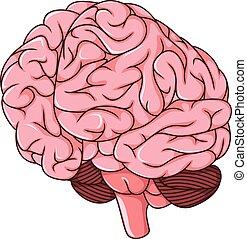 human brain clots cartoon - vector illustration of human...