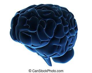 human brain - 3d rendered anatomy illustration of a human...
