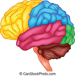 Human brain - vector illustration of Human brain
