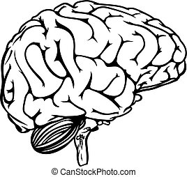 Human Brain From All Sides With Sections In Different Colors And