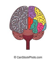 human brain icon - human brain with two cerebral hemispheres...