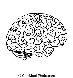 Human brain icon in outline style isolated on white ...