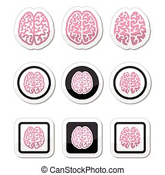 Human brain icons set - intelligenc