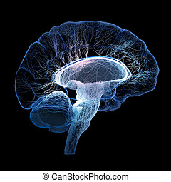 Human brain illustrated with interconnected small nerves -...
