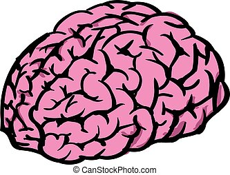 Human brain, illustration, vector on white background.