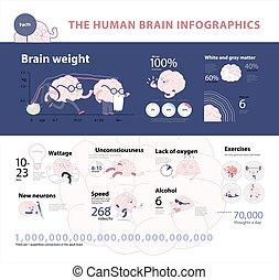 Human brain infographic 2