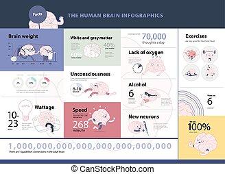 Human brain infographics