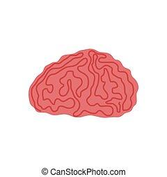 Human brain intelligence
