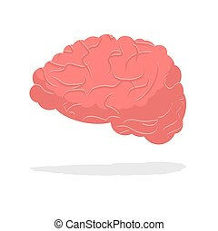 Human brain isolated. Brain on white background. part of body. Central body of human nervous system