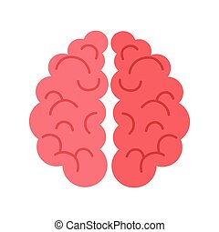 Human Brain Isolated on White Background.