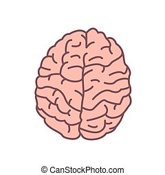 Human brain isolated on white background. Organ of nervous system. Symbol of intelligence, mindfulness, cognition, consciousness, wisdom. Decorative design element. Modern colored vector illustration.