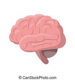 Human Brain isolated on white background, vector illustration in detailed flat design. Internal organ brain icon, medical poster concept, infographic element.