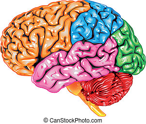Illustration body part vector, human brain lateral view