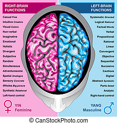 Ilustration body part, human brain left and right functions, yin and yang, feminine and masculine