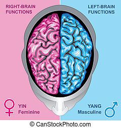 Human brain left and right function - Ilustration vector ...