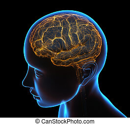 Human Brain Neural Network Cerebral Cortex