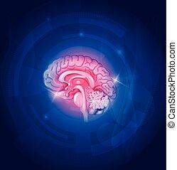 Human brain on a blue background, beautiful bright design.