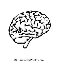 Human brain on a white isolated background. Vector image